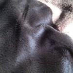 毛布的な羽布団カバー