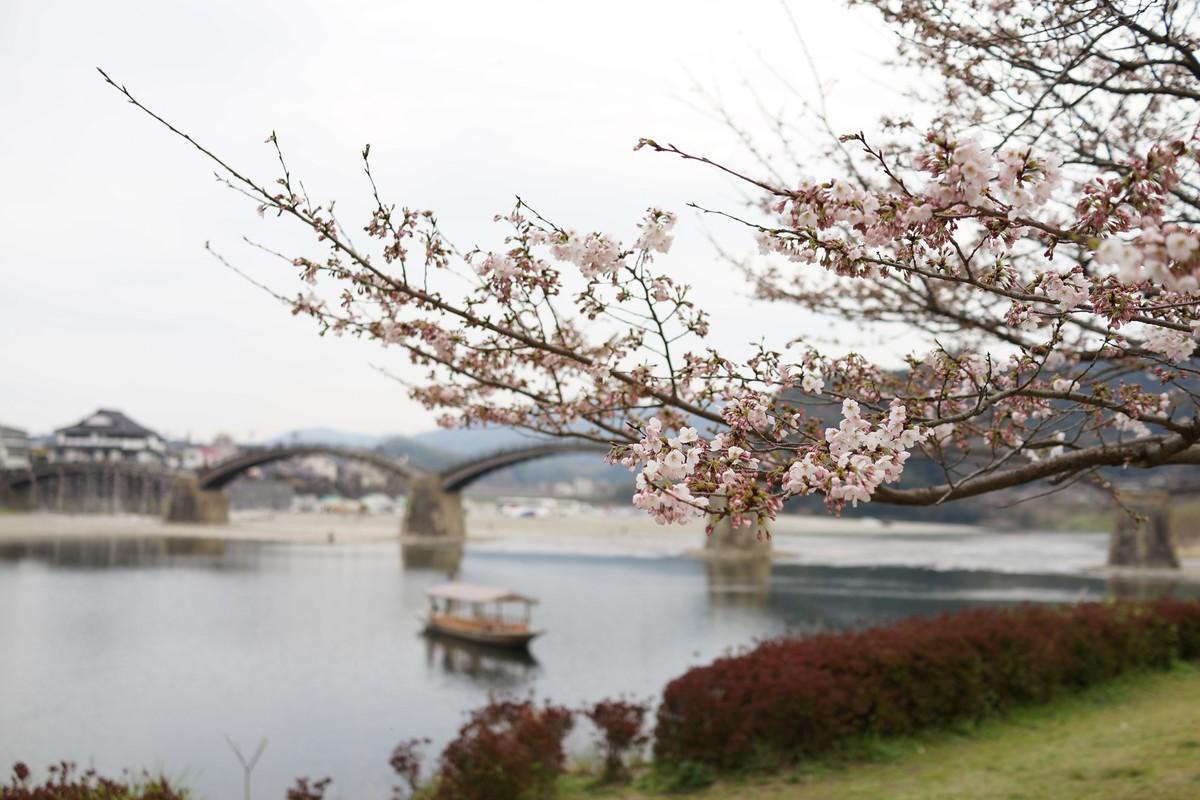 錦帯橋の写真 4月上旬